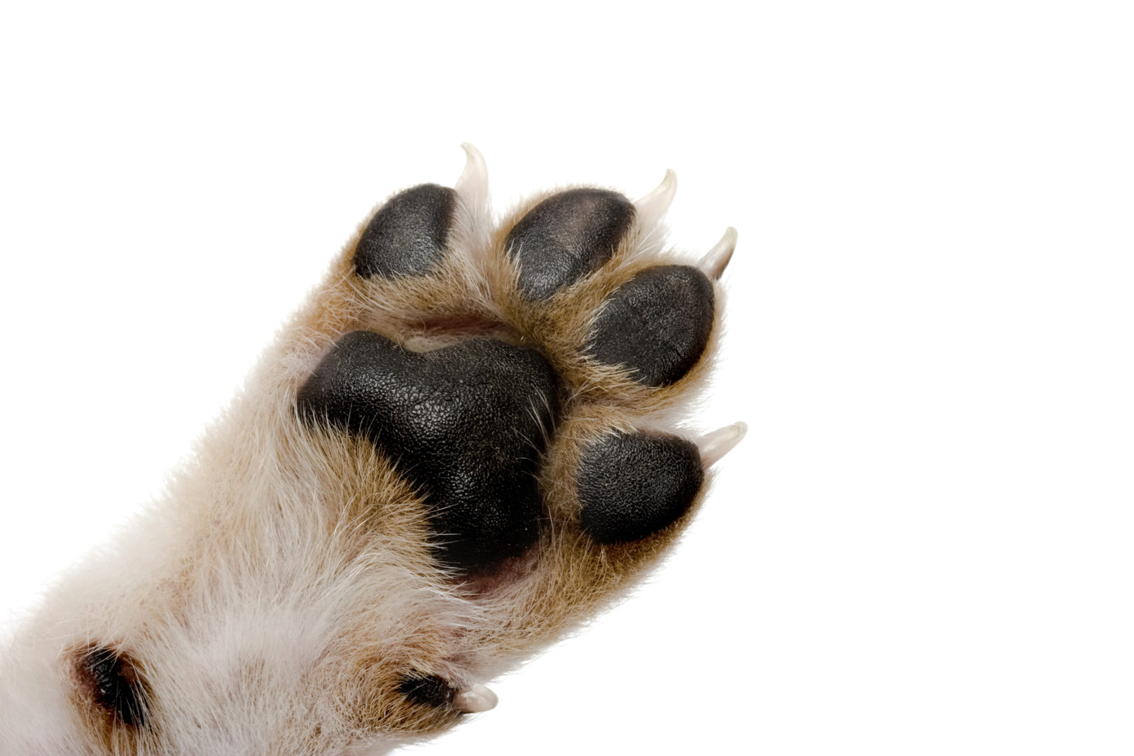 Spots On Dogs Paws
