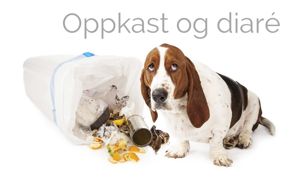 Oppkast og diaré hund